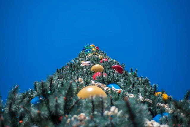 Oh, Christmas Tree! Photo by Bill Sferrazza.