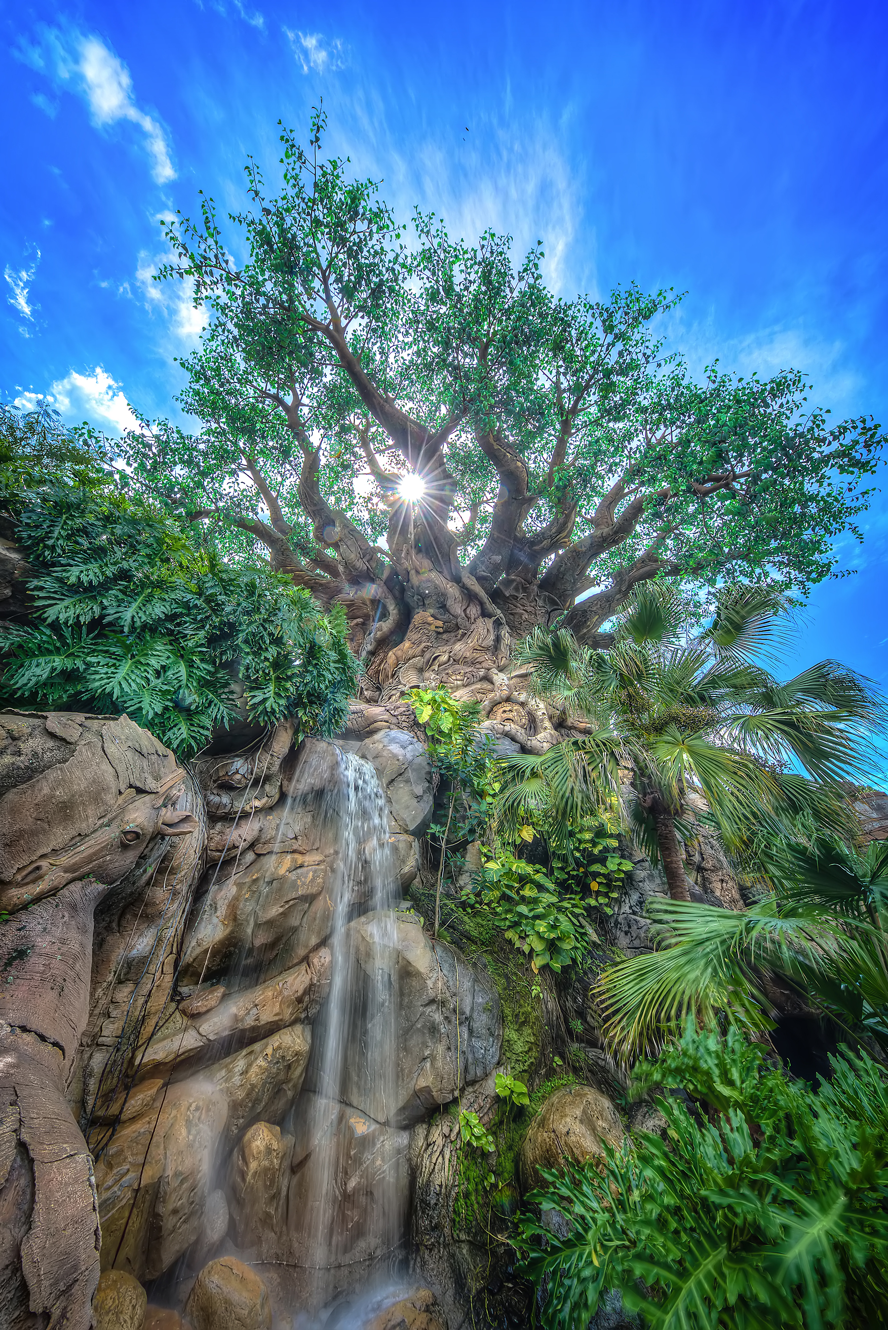 The Best Animal Kingdom Pictures - WDW Magazine