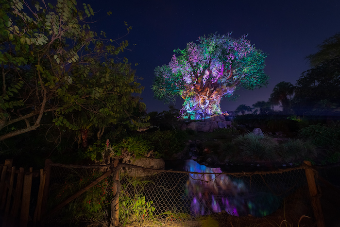 animal kingdom after hours