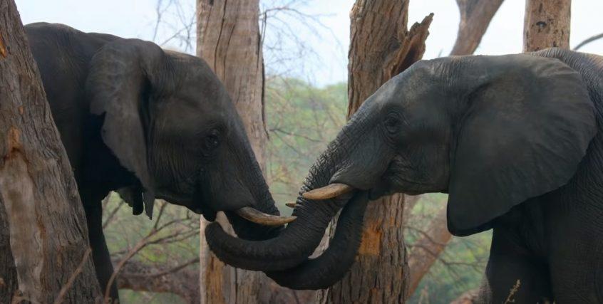 disneynature elephant disneyplus