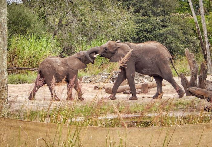 Elephants Kilimanjaro Safaris
