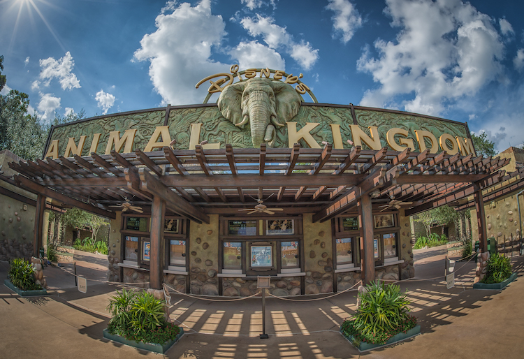 Facts about Animal Kingdom entrance