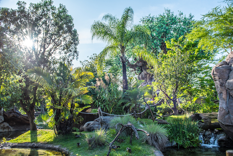 foliage inside the park