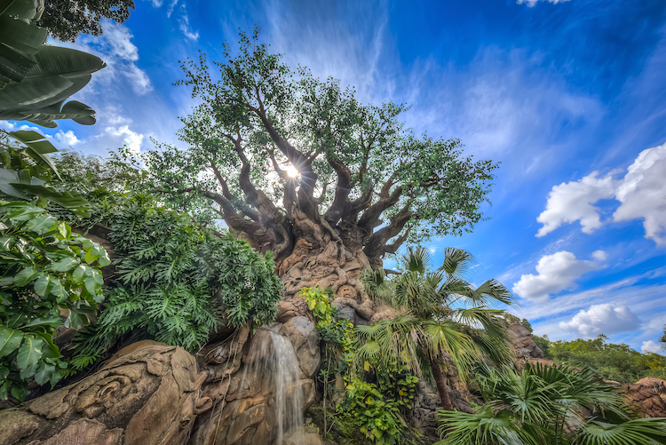 Tree of Life attractions open at disney - what does disney world look like