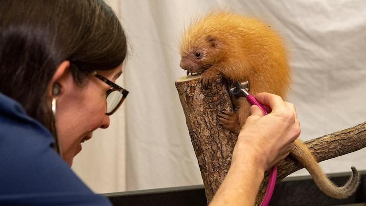 Baby Animals Porcupine at Animal Kingdom