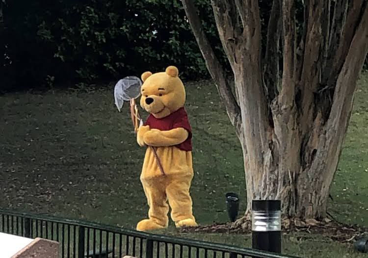 Winnie the Pooh with Butterfly Net at EPCOT