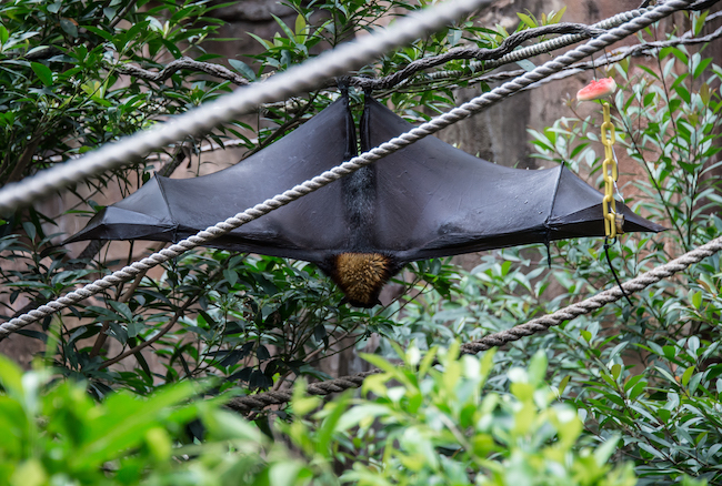 bat at asia at disney's animal kingdom