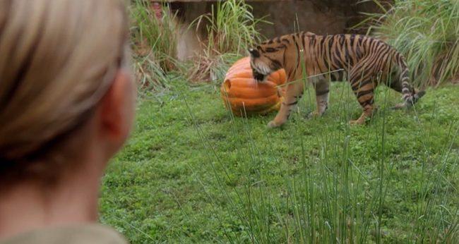animal kingdom disney plus review