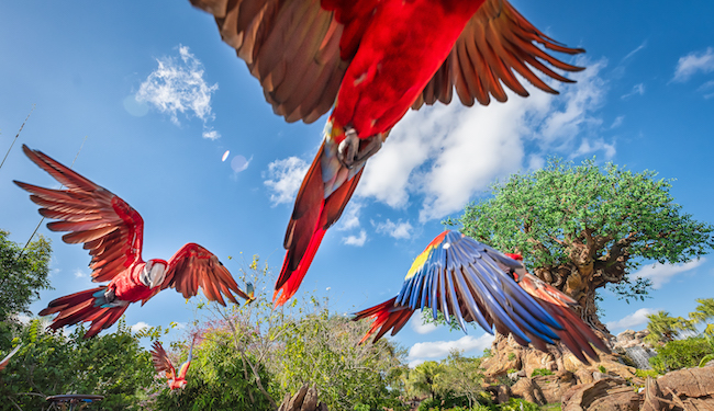 tree of life animal encounters winged encounters live shows at disney