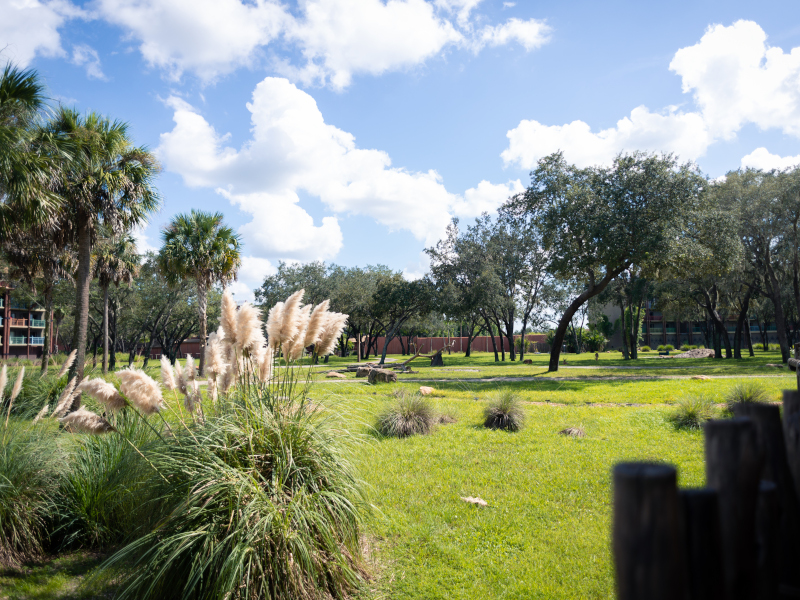 Get a Savanna View with the BEST Room at Animal Kingdom Lodge