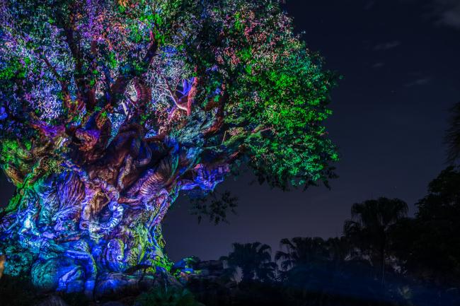 The Tree Of Life at Disney's Animal Kingdom after dark, illuminated.