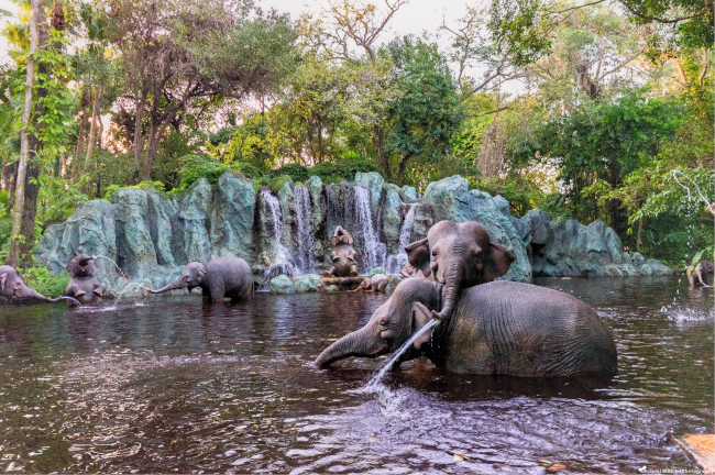 A herd of Elephants cool off in the rivers of Disney's Jungle Cruise _what-does-disney-world-look-like