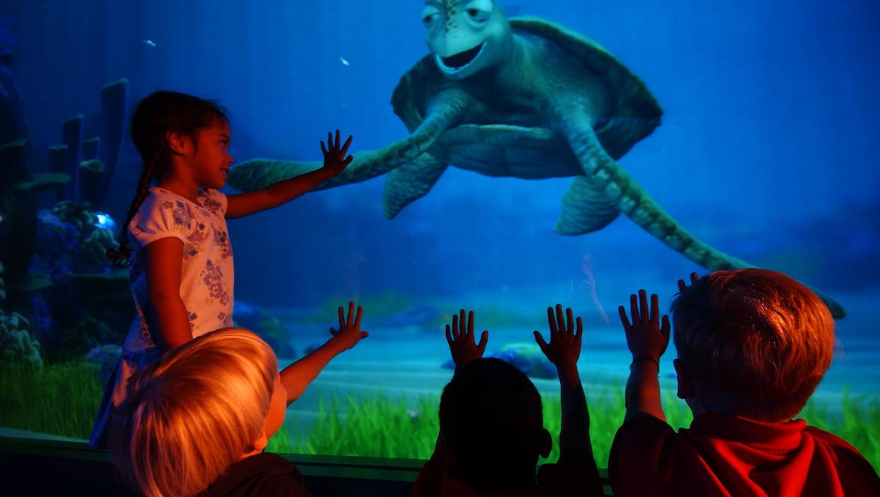 turtle talk reopening