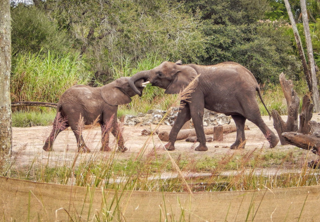 elephants_what-does-disney-world-look-like_judd