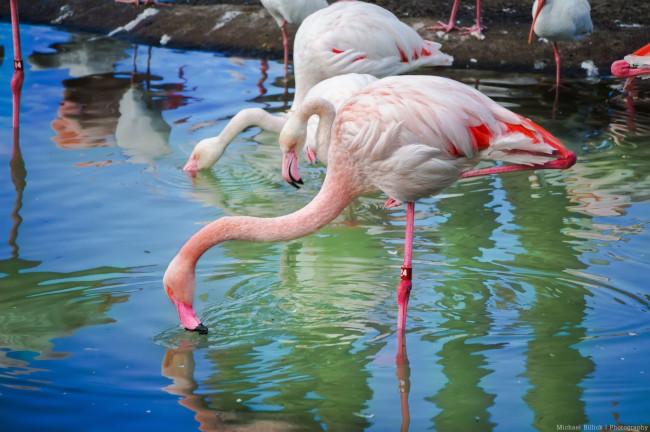 flamingos_what-does-disney-world-look-like_billick