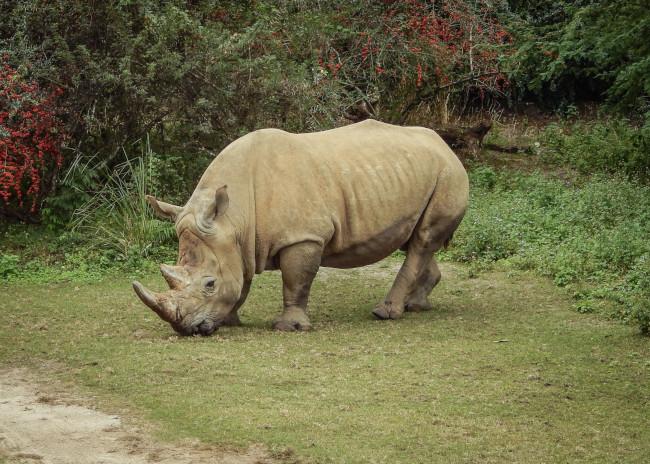 rhino_what-does-disney-world-look-like_judd