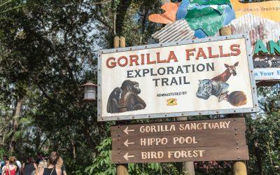 Journey Down the Gorilla Falls Exploration Trail: It's More Than Just Gorillas!