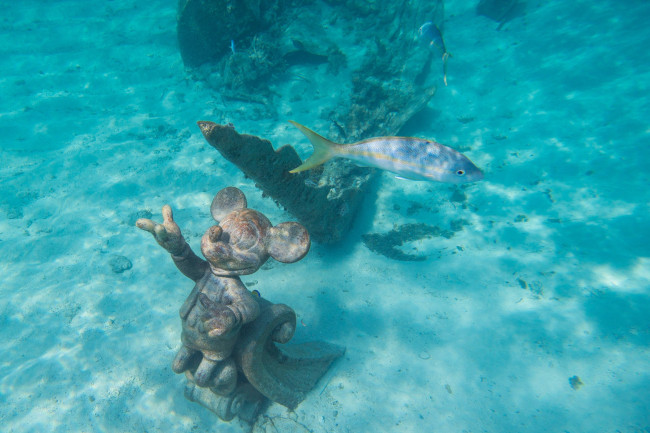 snorkeling_things-to-do-at-castaway-cay_matt-stroshane_dcl